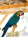 Parrot in the theme park outskirting Benidorm