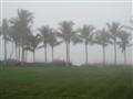 Palms at the Gulf