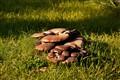 mushrooms in nature