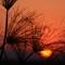 LS Sunset_7821