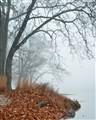 Fog on the Delaware