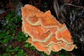 Big Orange Mushroom