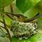 Chaikin_Ann_RufousHummingbird-2