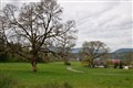 Quamichan Trees