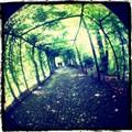 giardini reali, Varese