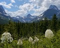 Bear Grass flowers in the foreground