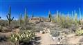 Saguaro pano