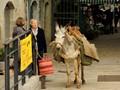 St Antonin donkey