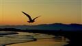 The Weary Wings