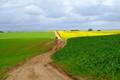 Green fields of earth
