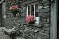 flowers on stone wall