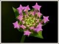 Little flower like a firework