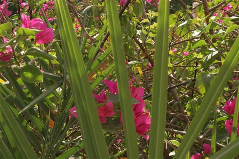 Zh Garden 1
