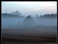 Morrning Fog