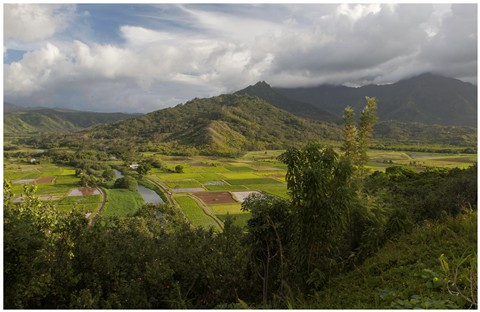 Kauai Valley 86