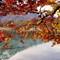 DSC_2281 d smaller: Bright orange Autumn leaves over Lake Offensee