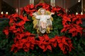The Nativity of Jesus