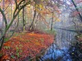 Amsterdamse bos in autumn - all is still