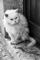 Italian shabby stray cat