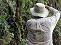 Photographing Gorillas in Uganda