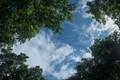 White clouds,  green tree canopy Kolkata,India.