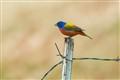 hunting perch