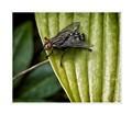 Fly resting