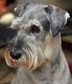 Dog :-)