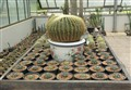 Birth place of Cactus, Botanical garden Chiang Mai, Thailand