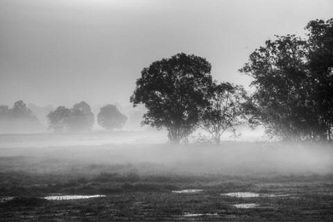 Misty mornings in Travancore