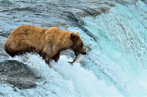 Alaska2012_D189_eds_01