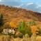 Autumn trees Ladybower