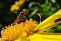 Pollen-Collector