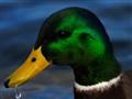 smaragd green