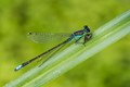 Damselfly and Breakfast