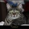 The Zephyr Cat