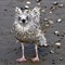 Gull - young on a windy beach-001