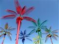 Montana Palm Trees