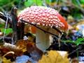 Mushroom in automn