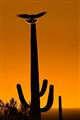 Saguaro Landing
