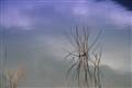 Dry weed in Banasura Lake