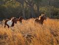 wild horses (1 of 1)