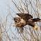 Teaneck Eagles62