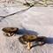 Sand mushrooms