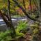 Oxtongue Rapids: Just west of Algonquin Park