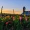 flower farm(web)