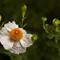 27 Feb 2015 - Lame Flower Shot