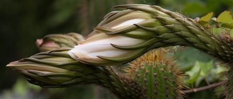 Alien Flowers copy
