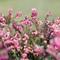 Flowers-grass blades-2_MERU_22.01.19-H.jpg_HD