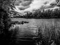 Fall black and white photograph of the Rancocas New Jersey water shed.